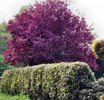 Herbstlicher baum garten, Fotografie, Pflanzen, Garten