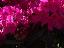 Blume hummel park, Fotografie