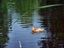 Schwimmer, Einsamkeit, Digital wasser ente, Fotografie