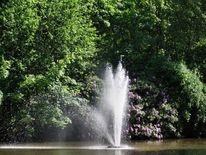Teich wasser park, Fotografie, Teich