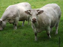 Bauernhof, Tiere, Weide, Fotografie