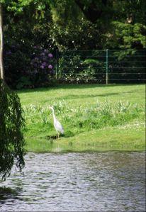 Vogel, Wasser, Park, Fotografie