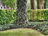 Garten, Fotografie