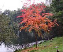 Landschaft, Herbstlicher baum, Fotografie, Herbst
