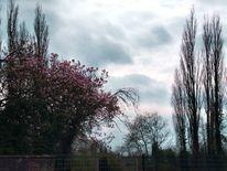 Mangolienbaum, Blüte, Baum blüte, Fotografie
