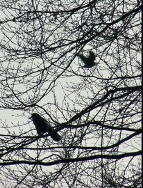 Baum, Natur, Vogel, Fotografie