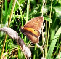 Garten, Fotografie, Schmetterling