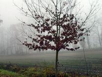 Landschaft, Nebel, Fotografie