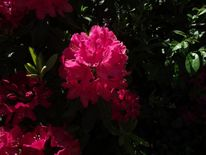 Sonne, Sommer, Blume park, Fotografie