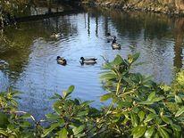 Park, Wasser, Ente, See