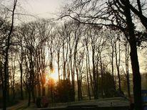 Baum, Park, Sonne, Fotografie