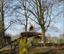 Storch auf nest, Fotografie