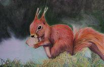 Nüsse, Tierportrait, Wald, Eichhörnchen