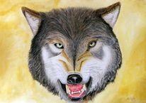 Tierportrait, Wolf, Zeichnungen, Tiere