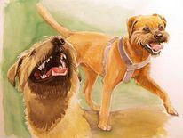 Hund, Bewegung, Borderterrier, Spiel