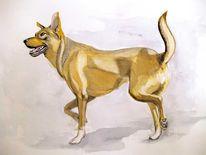 Hund, Schäfermix, Bewegung, Gesicht