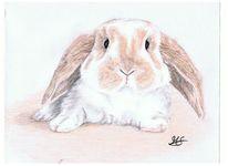 Portrait, Tiere, Buntstiftzeichnung, Hase