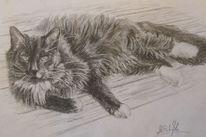Kater, Zeichnen, Tiere, Portrait