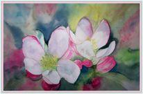 Aquarellmalerei, Blüte, Frühling, Rosa