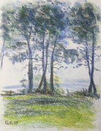 See, Baum, Strand, Wasser