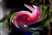 Experimente, Blumen, Fotografie, Surreal