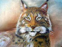 Katze, Luchs, Raubtier, Tiere