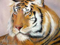 Wildkatzen, Tiger, Katze, Tiere
