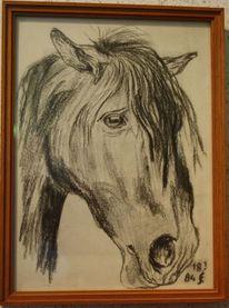 Pferdekopf, Kohlezeichnung, Pferde, Zeichnung