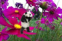 Digitale kunst, Panda