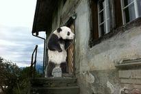 Malerei, Panda, Häuschen