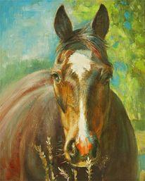 Pferdekopf, Pferdeportrait, Pferde, Malerei