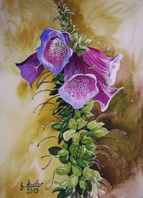 Fingerhut, Blumen, Sommer, Aquarellmalerei