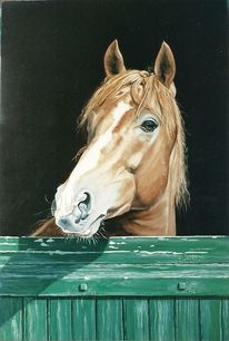 Porträtmalerei, Pferdesport, Stall, Mudau