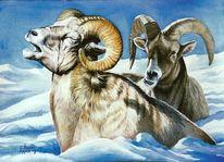 Wildmalerei, Odenwald, Wild, Schnee