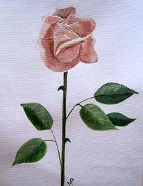 Rose, Edelrose