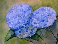 Blau, Blumen, Hortensien, Blüte