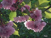 Frühjahr, Zartheit, Licht, Kirschblüte