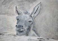 Esel, Tiere, Spachtel, Grau