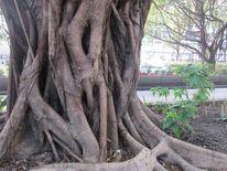 Baum, Lebendauer, Standhaftigkeit, Widerstand