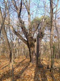 Wald, Herbst, Spaziergang, Baum