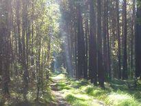 Landschaft, Wald, Baum, Fotografie