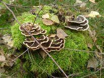 Fotografie, Pflanzen, Pilze, Landschaft