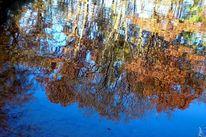 Blattwerk, Herbst, Farben, Blätter