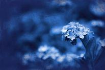 Blüte, Vergessen, Textur, Blau