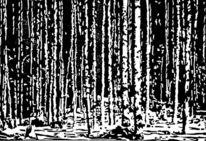 Linolschnitt, Hochdruck, Druckgrafik, Birkenwald