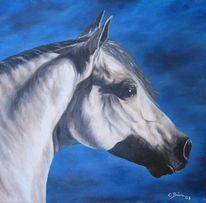 Pferde, Ölmalerei, Schimmel, Portrait