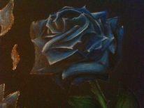 Blumen, Schwarzer hintergrund, Blau, Blaue rose