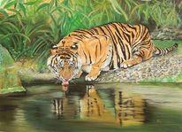 Großkatze, Pastellmalerei, Tierwelt, Tiger