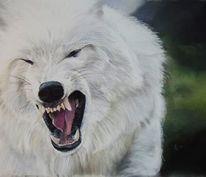 Polarwolf, Wolf, Wölfe, Wildlife