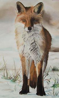 Fuchs, Tierwelt, Pastellmalerei, Tiere